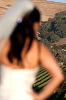 Bride in Vinyard at Winery Wedding